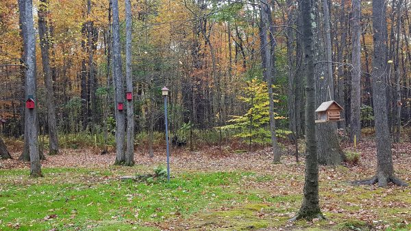 Family Campground Birdfeeders