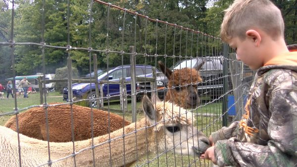 Oil Creek Family Campground Petting Zoo